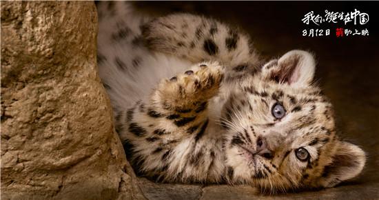 一部电影带来了萌嘟嘟的小雪豹,大熊猫幼仔,金丝猴宝宝和小藏羚羊