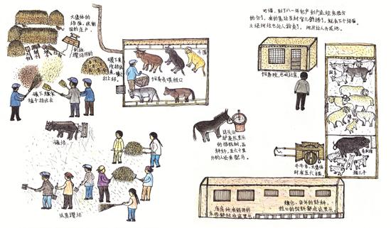 秦秀英手绘图