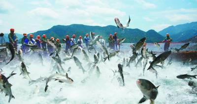 第二届中国杭州千岛湖有机鱼文化节 br/>暨有机渔业